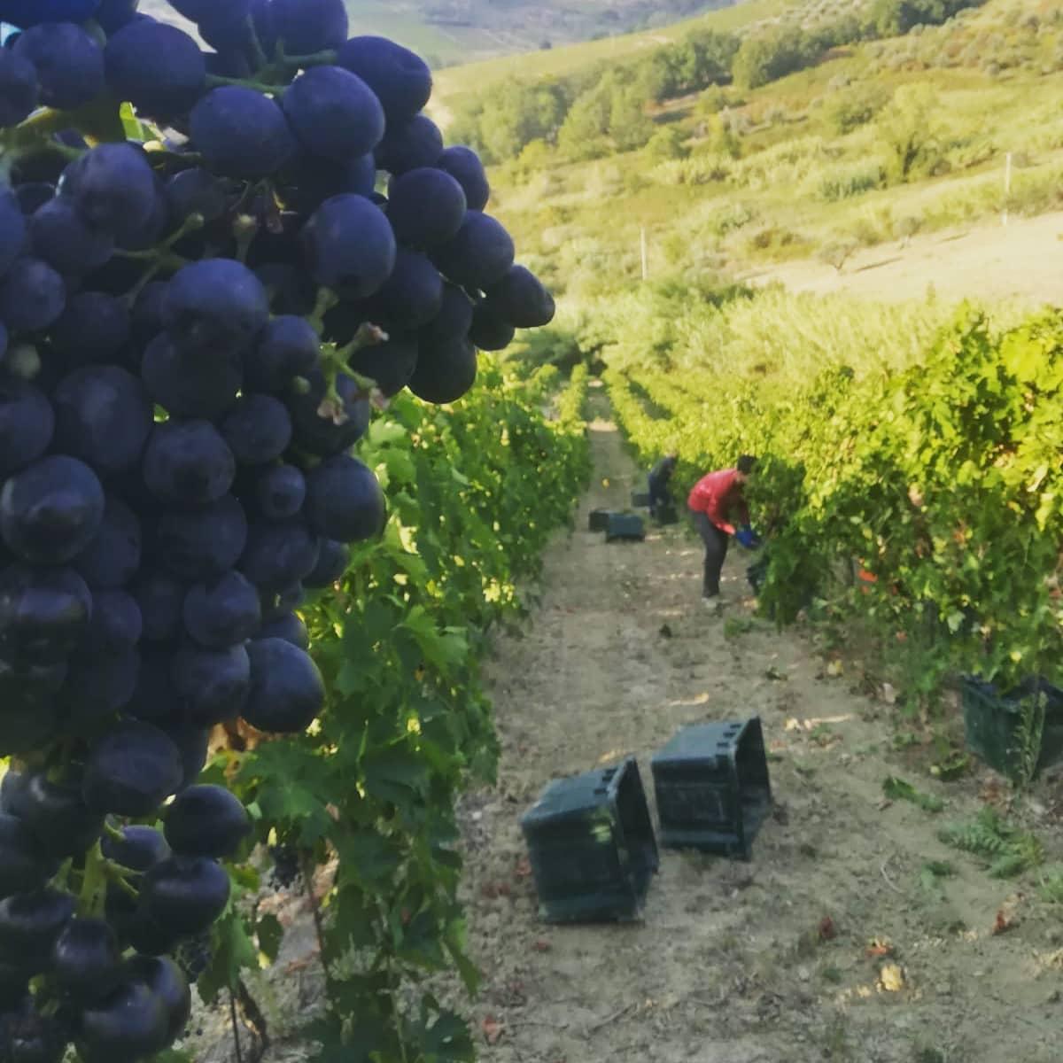 CANTINA WILMA – Il Vino di Donna Tethi