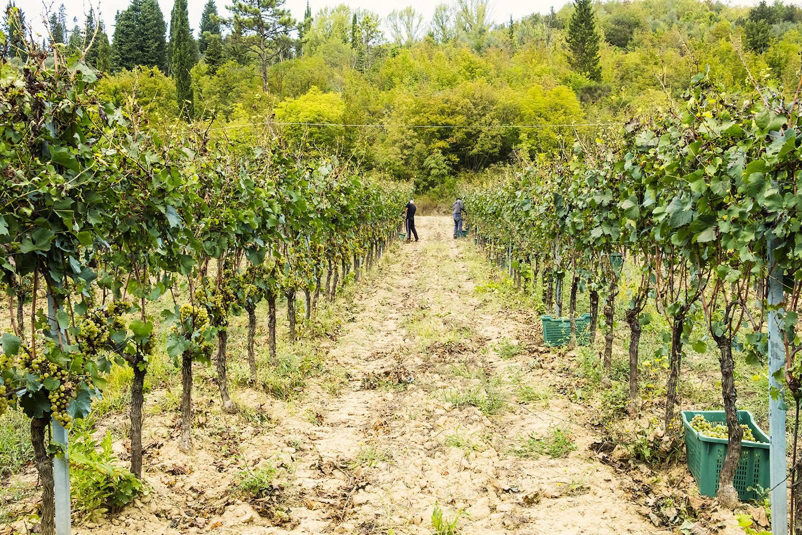 INSERRATA ORGANIC FARM